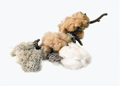 【1】原綿収穫 認証オーガニックコットン
